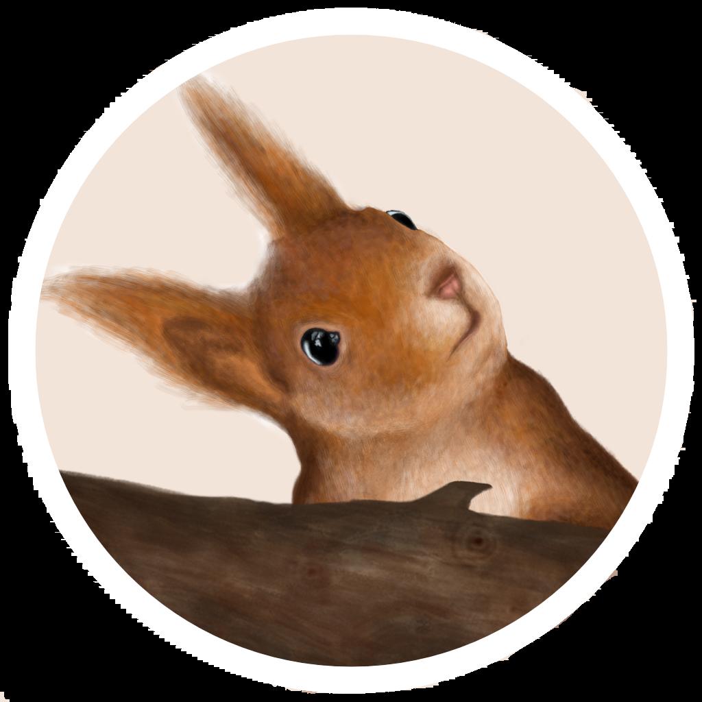 eichhörnchen bild